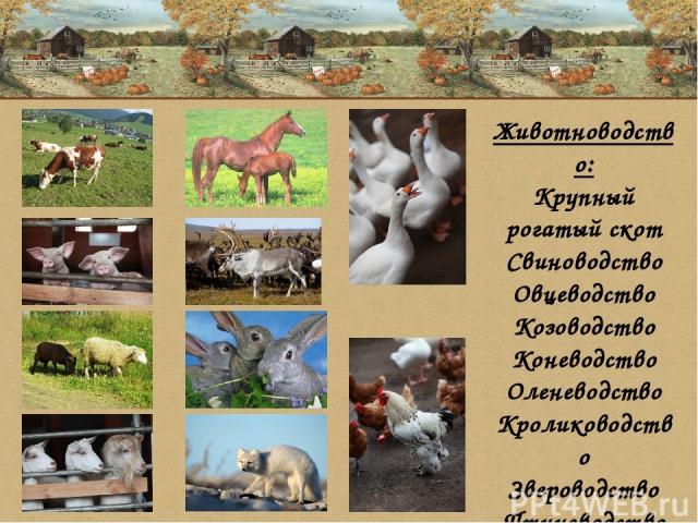 Животноводство: Крупный рогатый скот Свиноводство Овцеводство Козоводство Коневодство Оленеводство Кролиководство Звероводство Птицеводство