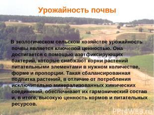 В экологическом сельском хозяйстве урожайность почвы является ключевой ценностью