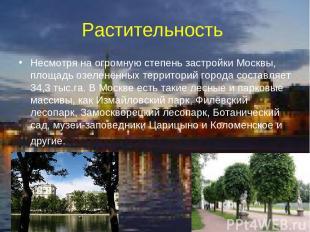 Растительность Несмотря на огромную степень застройки Москвы, площадь озеленённы