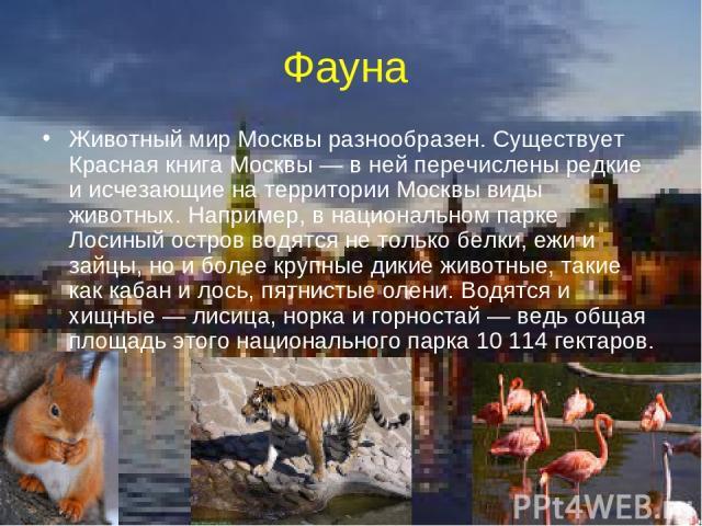Фауна Животный мир Москвы разнообразен. Существует Красная книга Москвы— в ней перечислены редкие и исчезающие на территории Москвы виды животных. Например, в национальном парке Лосиный остров водятся не только белки, ежи и зайцы, но и более крупны…
