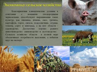 Благоприятные климатические условия в сочетании с мощными плодородными чернозема