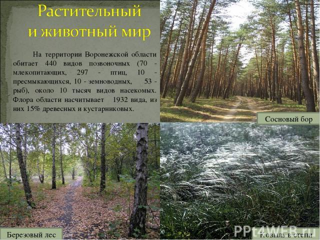 На территории Воронежской области обитает 440 видов позвоночных (70 - млекопитающих, 297 - птиц, 10 - пресмыкающихся, 10 - земноводных, 53 - рыб), около 10 тысяч видов насекомых. Флора области насчитывает 1932 вида, из них 15% древесных и кустарнико…