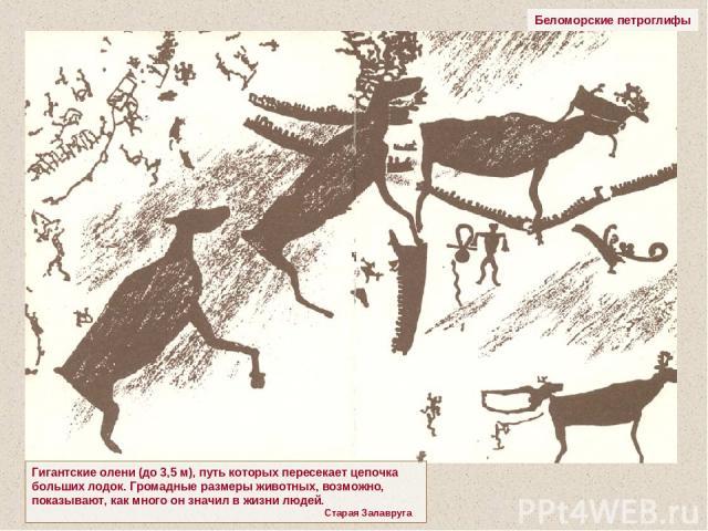 Беломорские петроглифы Гигантские олени (до 3,5 м), путь которых пересекает цепочка больших лодок. Громадные размеры животных, возможно, показывают, как много он значил в жизни людей. Старая Залавруга