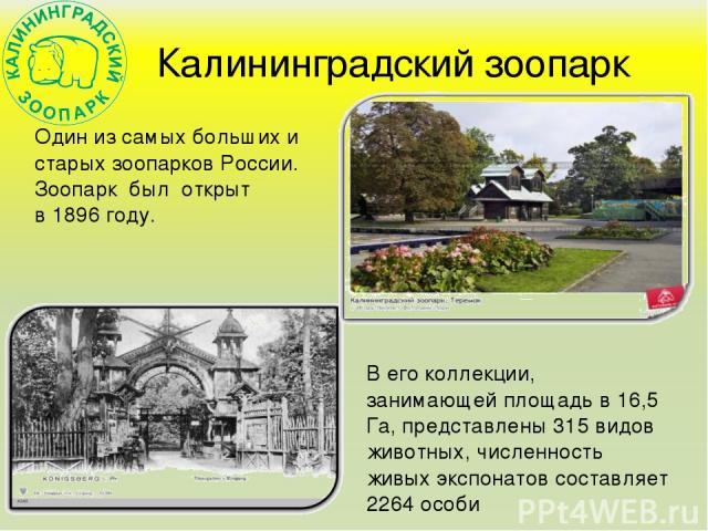 Калининградский зоопарк Один из самых больших и старых зоопарков России. Зоопарк был открыт в 1896 году. В его коллекции, занимающей площадь в 16,5 Га, представлены 315 видов животных, численность живых экспонатов составляет 2264 особи