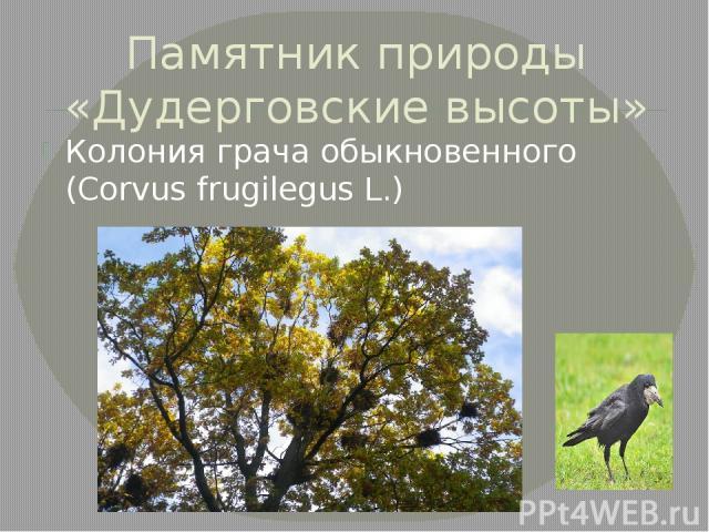 Памятник природы «Дудерговские высоты» Колония грача обыкновенного (Corvus frugilegus L.)