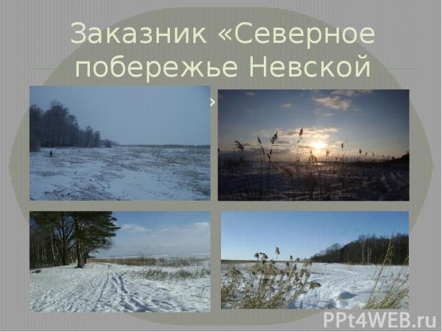 Заказник «Северное побережье Невской губы» зимой