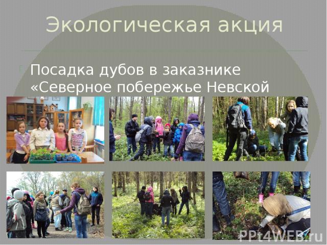 Экологическая акция Посадка дубов в заказнике «Северное побережье Невской губы»