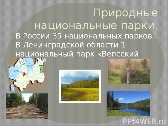Природные национальные парки. В России 35 национальных парков. В Ленинградской области 1 национальный парк «Вепсский лес»