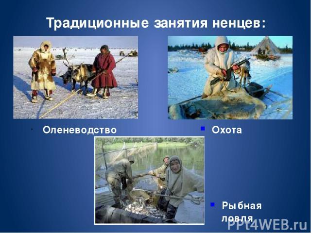 Оленеводство Традиционные занятия ненцев: Охота Рыбная ловля
