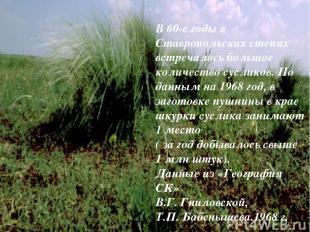 В 60-е годы в Ставропольских степях встречалось большое количество сусликов. По