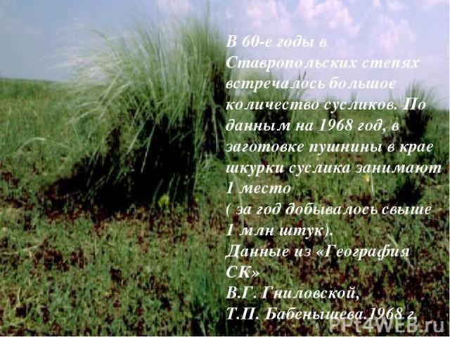 В 60-е годы в Ставропольских степях встречалось большое количество сусликов. По данным на 1968 год, в заготовке пушнины в крае шкурки суслика занимают 1 место ( за год добывалось свыше 1 млн штук). Данные из «География СК» В.Г. Гниловской, Т.П. Бабе…