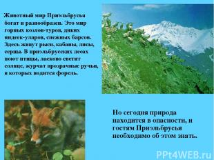 Животный мир Приэльбрусья богат и разнообразен. Это мир горных козлов-туров, дик