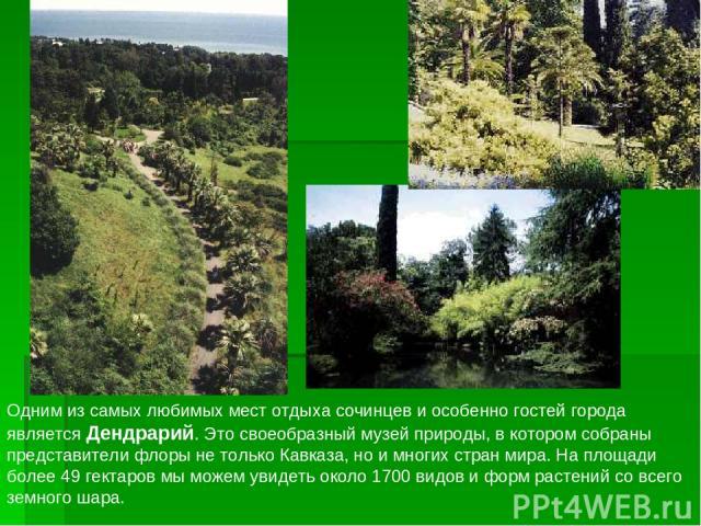 Одним из самых любимых мест отдыха сочинцев и особенно гостей города является Дендрарий. Это своеобразный музей природы, в котором собраны представители флоры не только Кавказа, но и многих стран мира. На площади более 49 гектаров мы можем увидеть о…