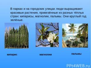 В парках и на городских улицах люди выращивают красивые растения, привезённые из