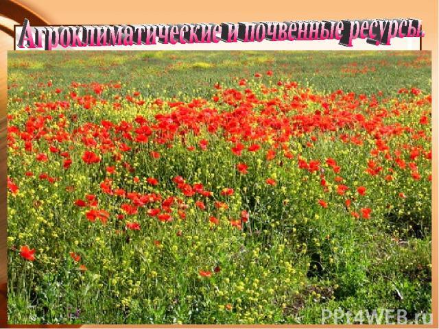 Равнины Предкавказья заняты степью и имеют плодородные почвы - чернозёмы. Большая часть их распахана и занята полями пшеницы, кукурузы, подсолнечника, сахарной свеклы, а также садами, бахчёй и виноградниками. Единственный в России район, где выращив…
