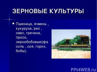 ЗЕРНОВЫЕ КУЛЬТУРЫ Пшеница, ячмень , кукуруза, рис , овес, гречиха, просо, зерноб