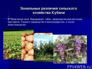 Зональные различия сельского хозяйства Кубани 4. Предгорная зона. Выращивают таб