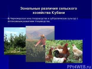 Зональные различия сельского хозяйства Кубани 5. Черноморская зона плодоводства