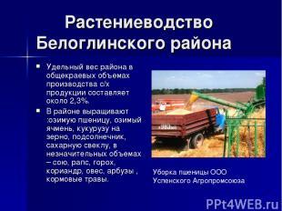 Растениеводство Белоглинского района Удельный вес района в общекраевых объемах п