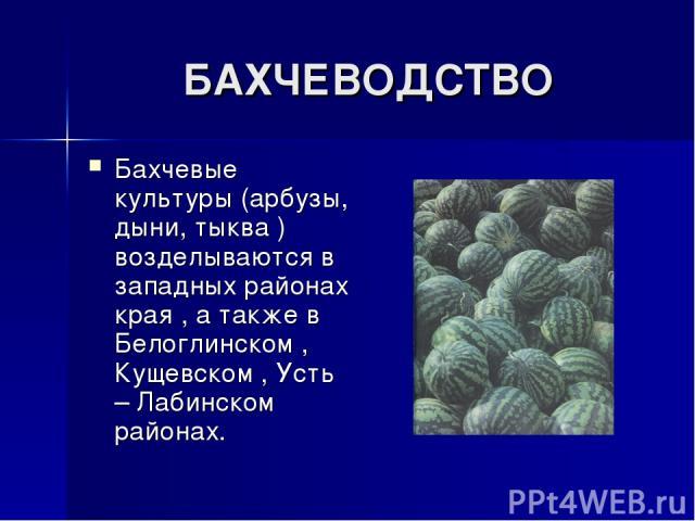 БАХЧЕВОДСТВО Бахчевые культуры (арбузы, дыни, тыква ) возделываются в западных районах края , а также в Белоглинском , Кущевском , Усть – Лабинском районах.