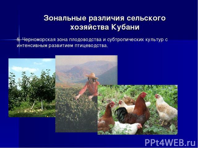 Зональные различия сельского хозяйства Кубани 5. Черноморская зона плодоводства и субтропических культур с интенсивным развитием птицеводства.