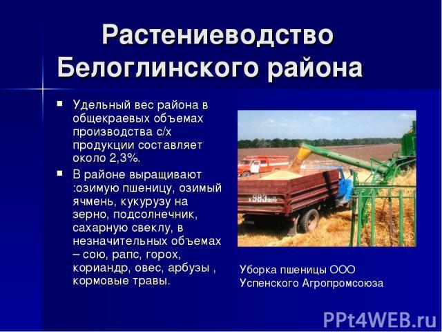 Растениеводство Белоглинского района Удельный вес района в общекраевых объемах производства с/х продукции составляет около 2,3%. В районе выращивают :озимую пшеницу, озимый ячмень, кукурузу на зерно, подсолнечник, сахарную свеклу, в незначительных о…