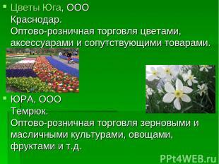 Цветы Юга, ООО Краснодар. Оптово-розничная торговля цветами, аксессуарами и сопу