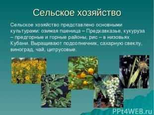 Сельское хозяйство Сельское хозяйство представлено основными культурами: озимая