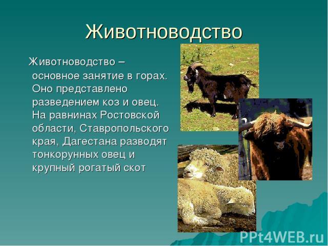 Животноводство Животноводство – основное занятие в горах. Оно представлено разведением коз и овец. На равнинах Ростовской области, Ставропольского края, Дагестана разводят тонкорунных овец и крупный рогатый скот