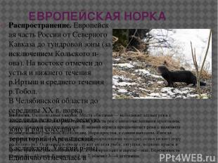 ЕВРОПЕЙСКАЯ НОРКА Распространение.Европейская часть России от Северного Кавказа