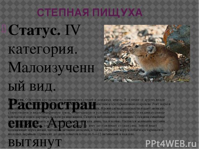 СТЕПНАЯ ПИЩУХА Статус.IV категория. Малоизученный вид. Распространение.Ареал вытянут узкой полосой. Северная его граница проходит от Среднего Заволжья (южнее г. Самары) через Южное Предуралье, огибает с юга Уральские горы, пролегает по лесостепной…