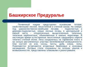 Башкирское Предуралье Почвенный покров представлен основными типами, свойственны
