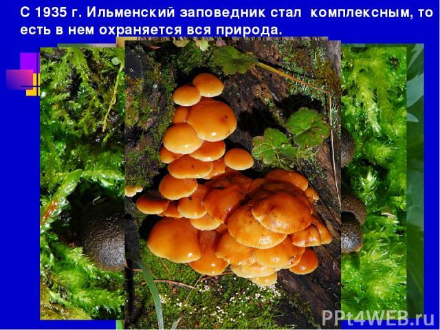 С 1935 г. Ильменский заповедник стал комплексным, то есть в нем охраняется вся природа.