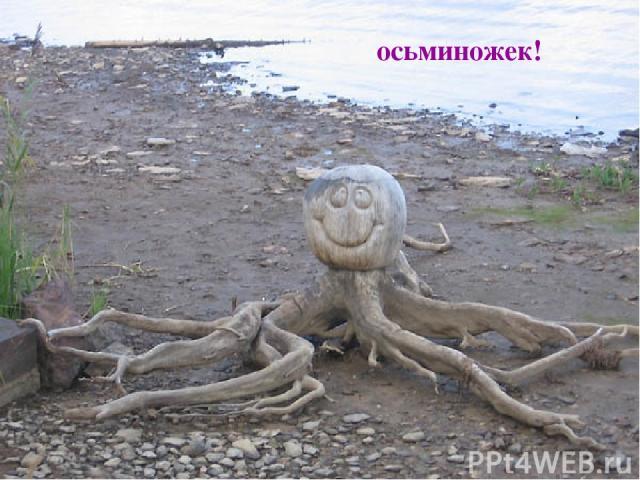 осьминожек!