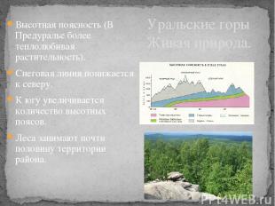 Высотная поясность (В Предуралье более теплолюбивая растительность). Снеговая ли