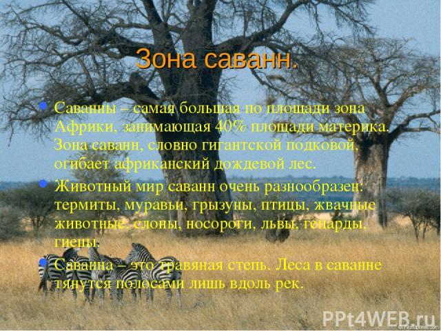 Зона саванн. Саванны – самая большая по площади зона Африки, занимающая 40% площади материка. Зона саванн, словно гигантской подковой, огибает африканский дождевой лес. Животный мир саванн очень разнообразен: термиты, муравьи, грызуны, птицы, жвачны…