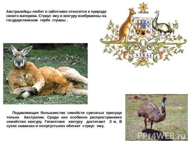 Австралийцы любят и заботливо относятся к природе своего материка. Страус эму и кенгуру изображены на государственном гербе страны . Подавляющее большинство семейств сумчатых присуще только Австралии. Среди них особенно распространенно семейство кен…