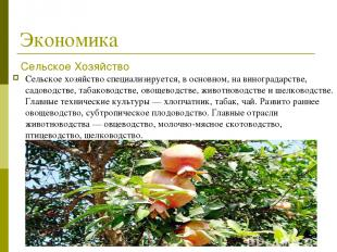 Экономика Сельское хозяйствоспециализируется, в основном, на виноградарстве, са