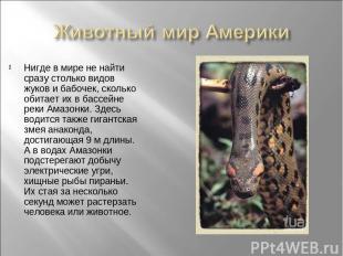 Нигде в мире не найти сразу столько видов жуков и бабочек, сколько обитает их в