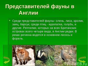 Представителей фауны в Англии Среди представителей фауны- олень, лиса, кролик, з