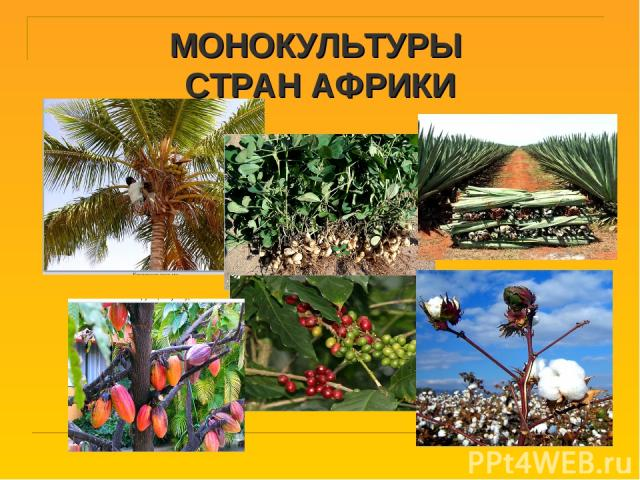 МОНОКУЛЬТУРЫ СТРАН АФРИКИ