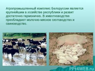 Агропромышленный комплекс Белоруссии является крупнейшим в хозяйстве республики
