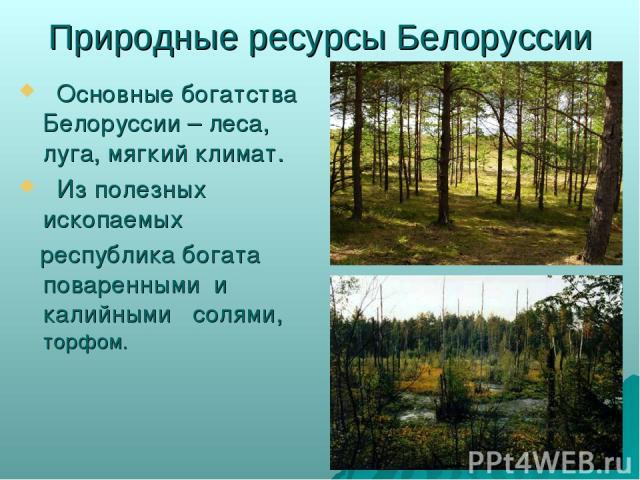 Природные ресурсы Белоруссии Основные богатства Белоруссии – леса, луга, мягкий климат. Из полезных ископаемых республика богата поваренными и калийными солями, торфом.