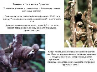 Ленивец – тоже житель Бразилии У ленивца длинные и тонкие лапы с 3 пальцами с оч