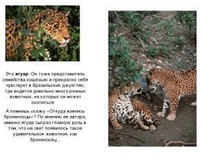 Это ягуар. Он тоже представитель семейства кошачьих и прекрасно себя чувствует в