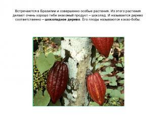 Встречаются в Бразилии и совершенно особые растения. Из этого растения делают оч