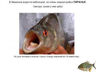 В Амазонке водится небольшая, но очень хищная рыбка ПИРАНЬЯ. Смотри, какие у нее