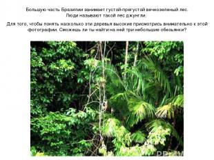 Большую часть Бразилии занимает густой-прегустой вечнозеленый лес. Люди называют