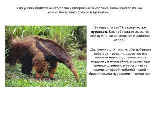 В джунглях водится много разных интересных животных. Большинство из них можно по