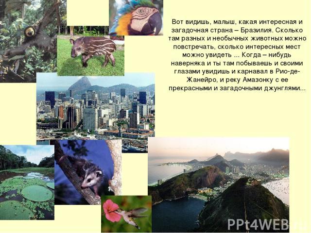 Вот видишь, малыш, какая интересная и загадочная страна – Бразилия. Сколько там разных и необычных животных можно повстречать, сколько интересных мест можно увидеть ... Когда – нибудь наверняка и ты там побываешь и своими глазами увидишь и карнавал …